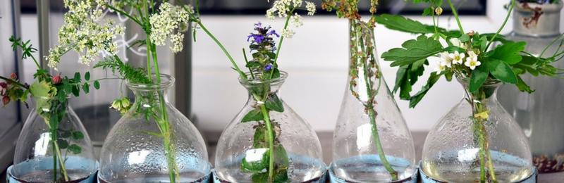 Fleurs de Bach à l'Institut La BioAttitude - La Wantzenau - Eurométropole de Strasbourg